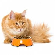 Магазин ТОR ZOO - разнообразный сухой корм для котов